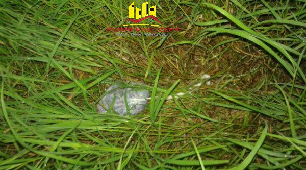 Ari-ari bayi yang ditemukan di semak-semak rumah kosong Perumahan Taman Jatisari Permai, Klaster Bali, kini dirawat di RS Kartika Husada Jatiasih.[IDH]