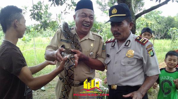 Waka Polsek Setu Iptu H Yamin dan Kepala Desa Burangkeng, Nemin bin H Sain saat memegang ular didampingi seorang pawang ular.[IDH]