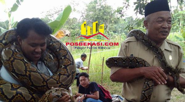 Kepala Desa Burangkeng, Nemin, saat memegang ular didampingi seorang pawang ular.[IDH]