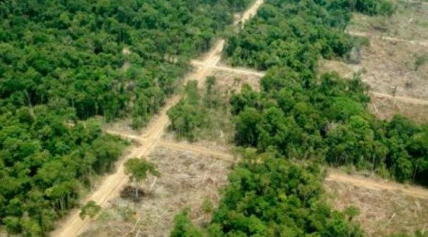 Hutan ynag dipetak untuk kwasan industri.[DOK]