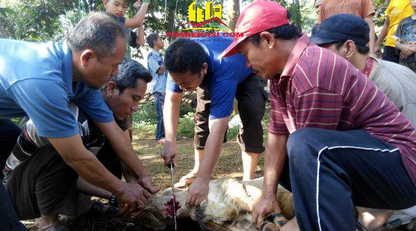 Penyembelihan domba kurban keluarga besar jamaah Ponpes Al Marhamah.[RAD]