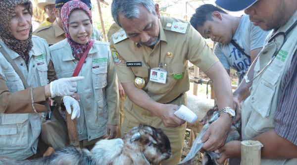 Wakil Walikota Bekasi H Ahmad Syaikhu cek langsung kesehatan hewan kurban yang di jual di Kota Bekasi.[IDH]