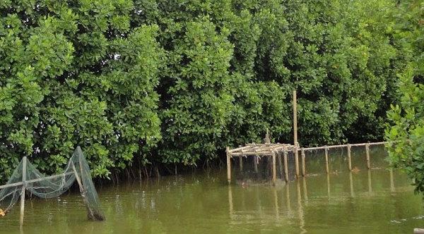 Hutan Mangrove.[DOK]