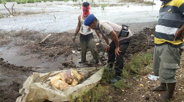 Mayat wanita yang ditemukan di lumpur hidup Muara Gembong.[IST]
