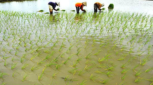 Banjir rendam pertanian.[DOK]