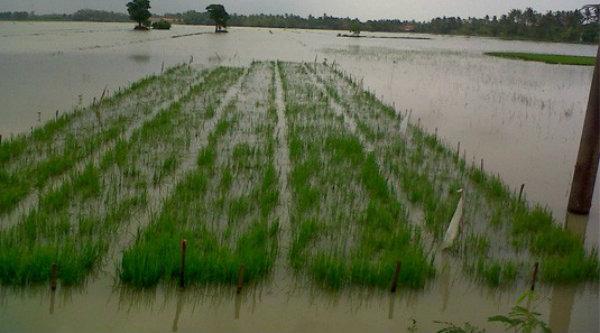 Lahan pertanian terendam banjir.[IST]