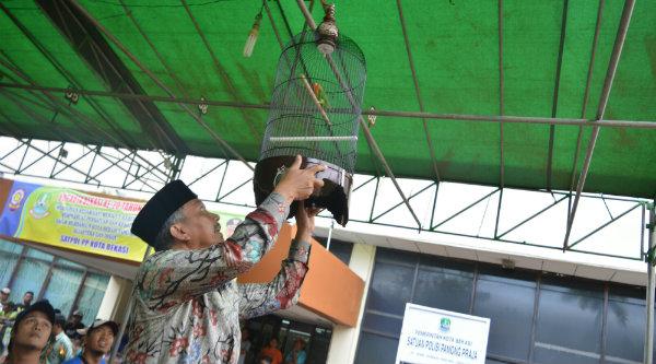 Wakil Walikota Bekasi Ahmad Syaikhu memeprhatikan burung berkicau memperebutkan piala Waliko Bekasi.[ISH]