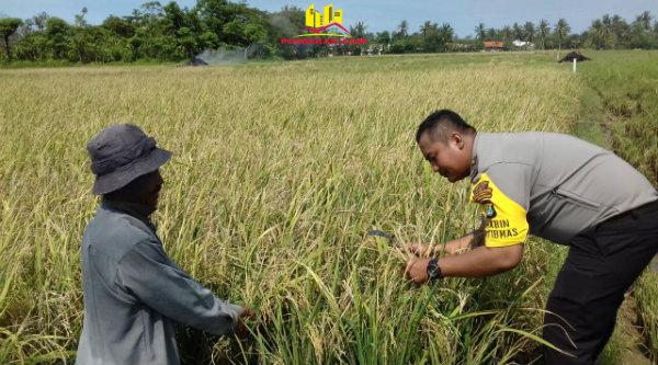 Binmaspol Desa Pantai Sederhana, Briptu Suhendra, bersama petani Kampung Tanjung Nuhun yang gagal panen.[ZAI]